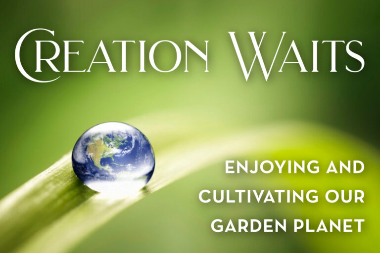 Creation Waits Series